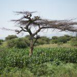 Central Rift Valley, Ethiopia