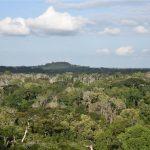 Wider Taï Forest Area, Côte d'Ivoire
