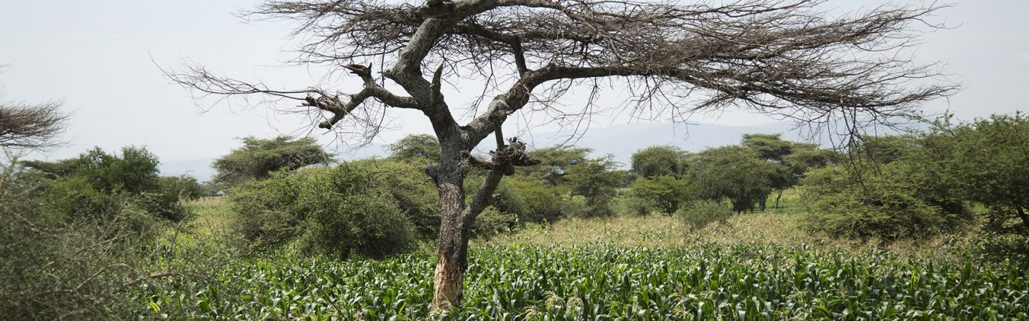 Central Rift Valley, Ethiopia - IDH - the sustainable trade
