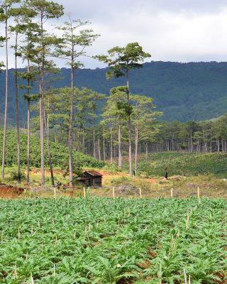 Landscape approaches in Central Highlands, Vietnam