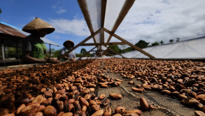 Cocoa sourcing - Chocolate Bar Ransiki West-Papua Indonesia
