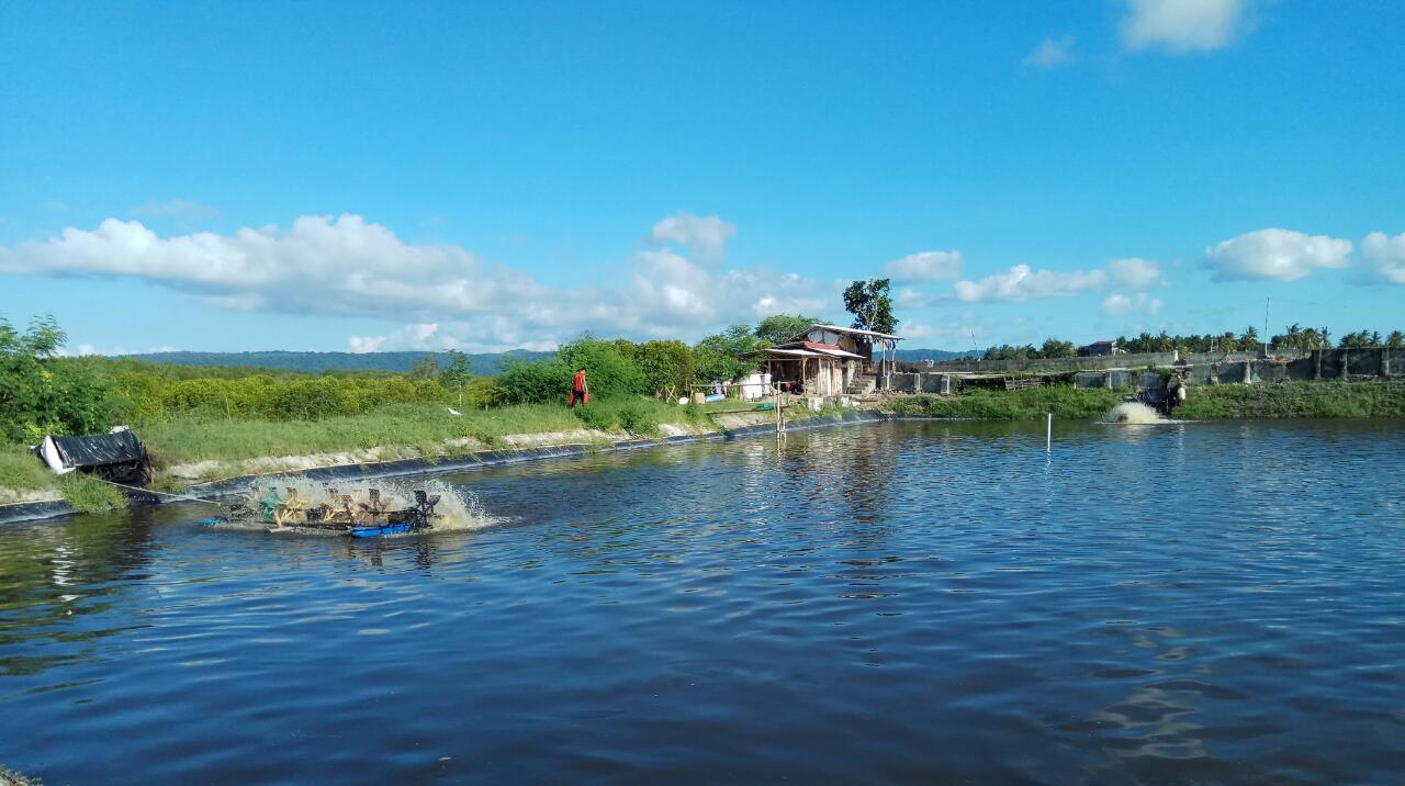 Shrimp farming Indonesia