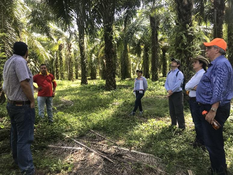 Palm oil plantation, Colombia
