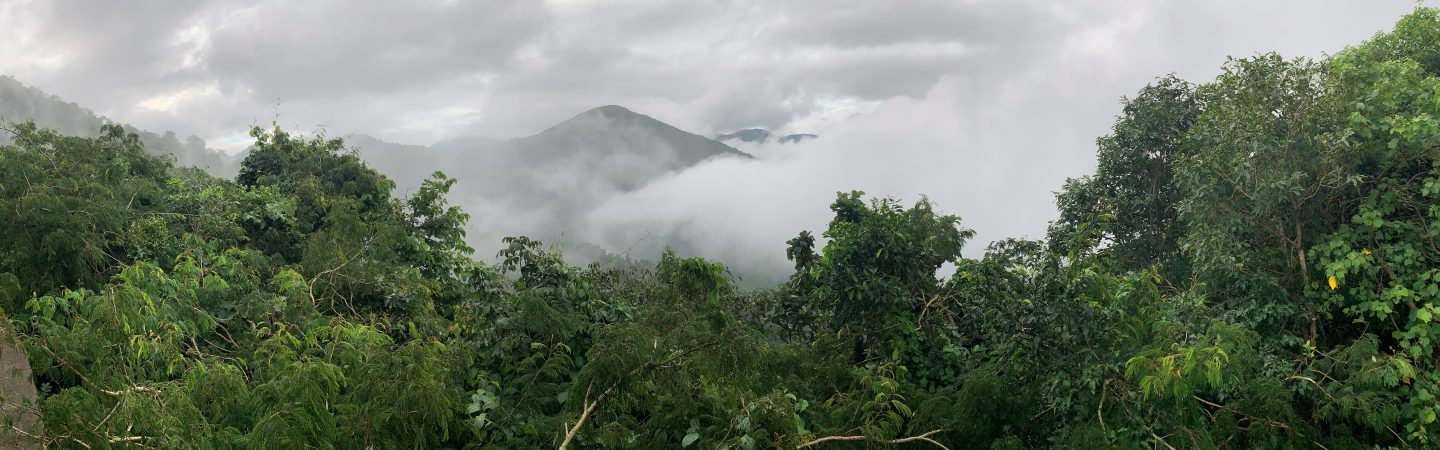 Mountains and forest in Andhra Pradesh, India