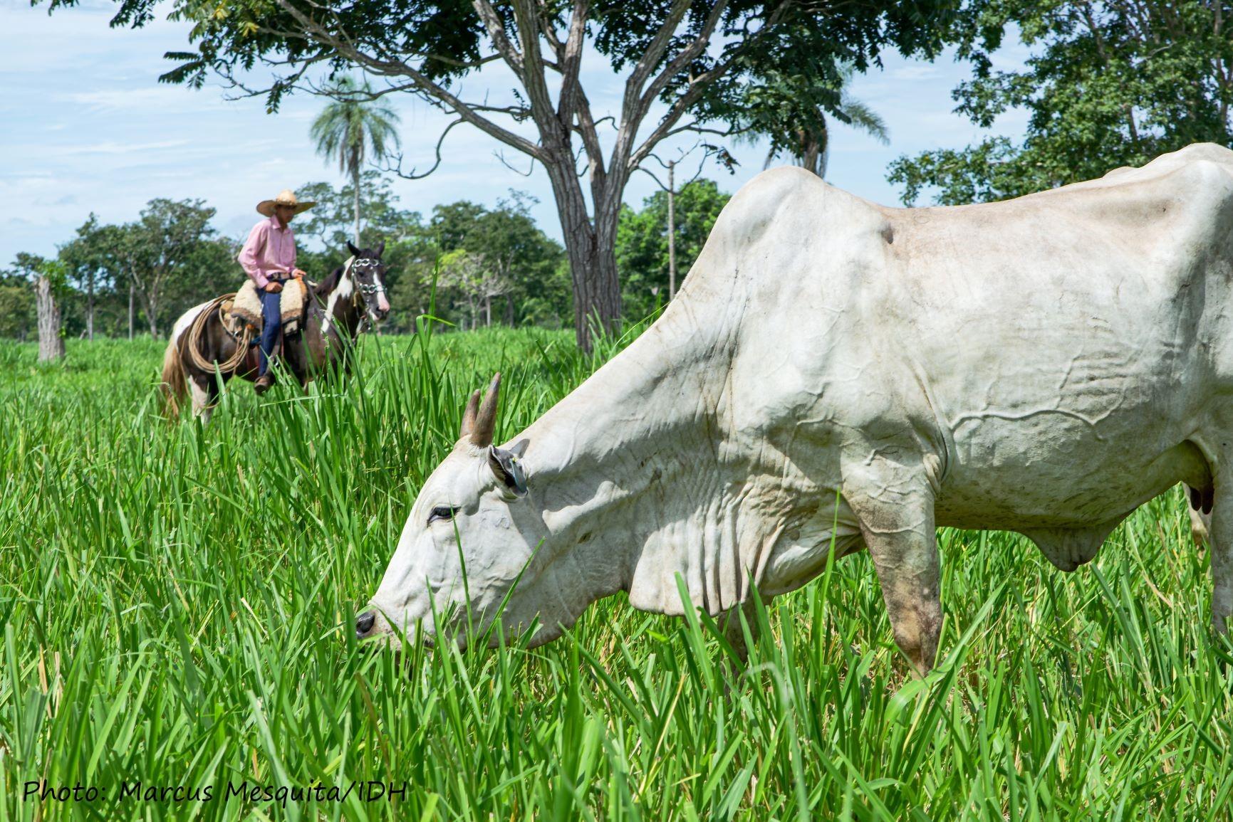 Cattle farmer in Mato Grosso state