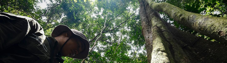 West Kalimantan landscape approach forest monitoring