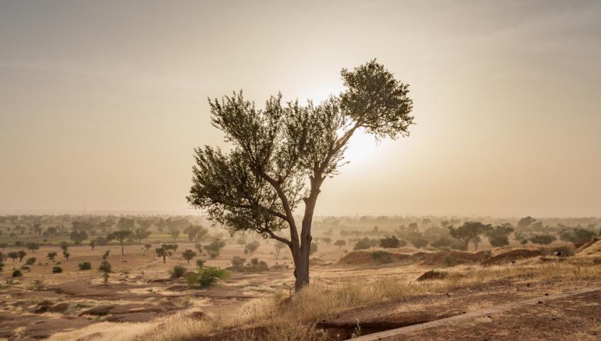 Regreen Sahel Region